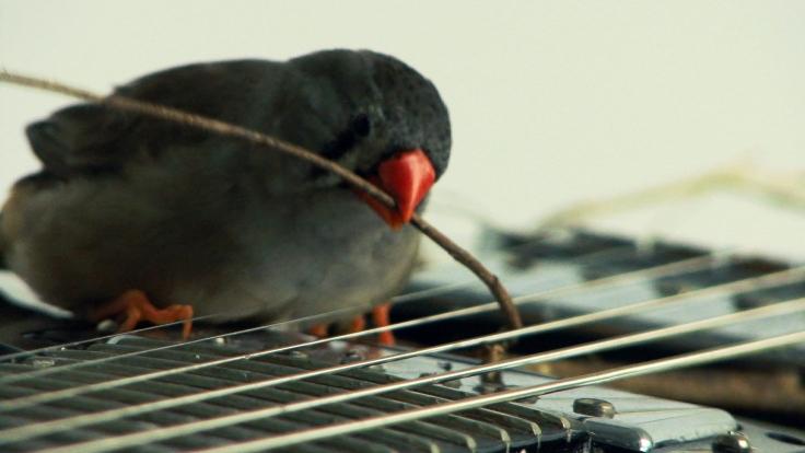 les-oiseaux-de-celeste-2008-ariane-michel-et-celeste-boursier-mougenot-collection-frac-franche-comte-ariane-michel-et-celeste-boursier-2